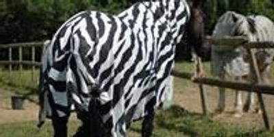 Zebra Stripes Are Not Good Landing Strips