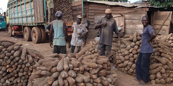 Cataloging Genetic Information about Yams