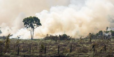 Commodity Farming Accelerating Climate Change in the Amazon Rainforest