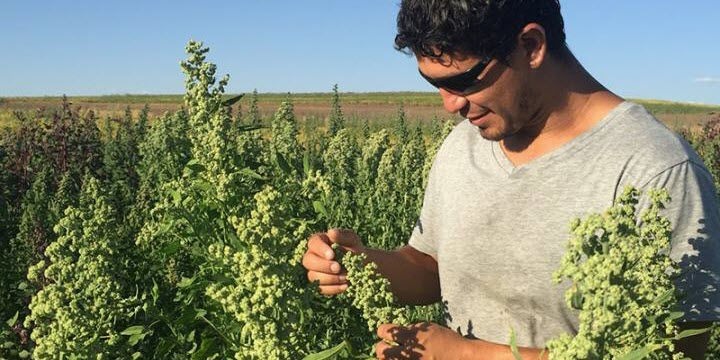 Breeding Better Seeds: Healthy Food for More People