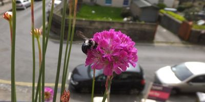 Gardens Are Secret Powerhouse for Pollinators, Research Finds