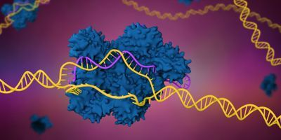 New CRISPR-Based Gene Editing Tool Makes Sequential Genome Edits