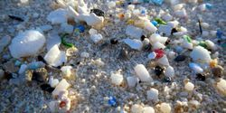 Microplastic Sizes in Estuary and Coastal Ocean Revealed