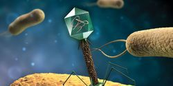 New Ways of 'Seeing' Viruses