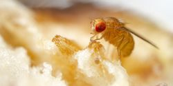 How Some Animals Sense the Gritty Texture of Their Food
