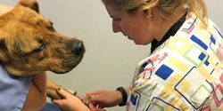 Study to Examine COVID-19 Transmission between Pets and Owners