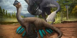 Preserved Dino Found Sitting on Nest of Eggs with Fossilized Babies