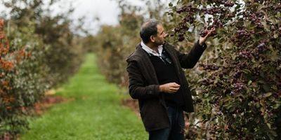 Scientists Aim to Root Out Rapid Apple Decline Culprit