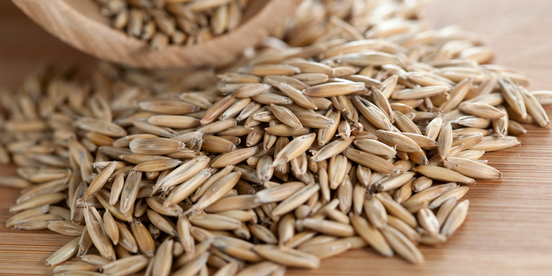 Scientists Publish the First Full Reference Genome for Rye