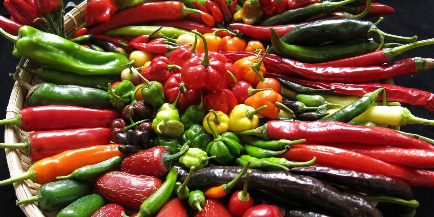 Study of Chili Genetics Could Lead to Greater Variety