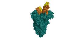 IONTAS Identifies Novel SARS-CoV-2 Neutralizing Antibodies