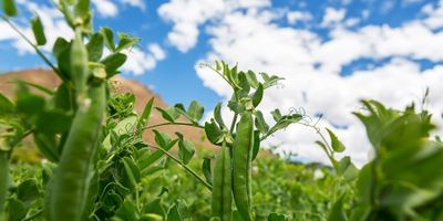 Crop Rotations Offer More Sustainable, Nutritious Food Production