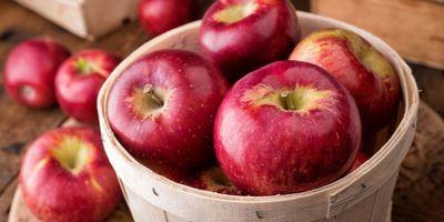Do Antibiotics Destroy Apples' Native Microbiome?