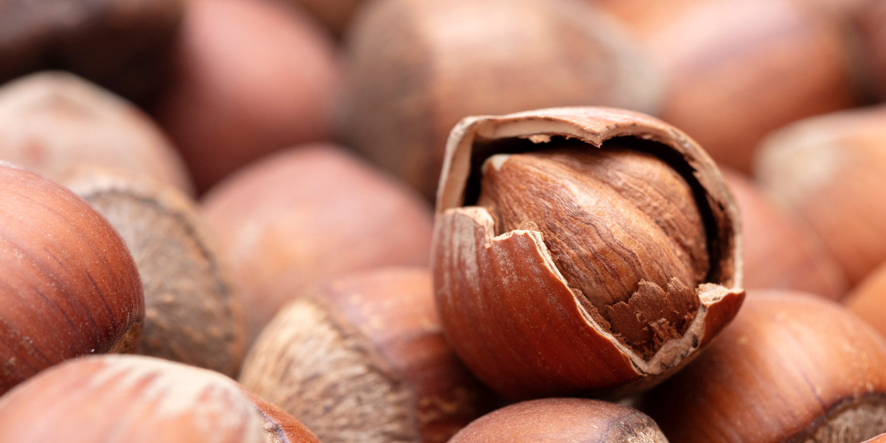 The Newest Piece in the Hazelnut Genome Puzzle