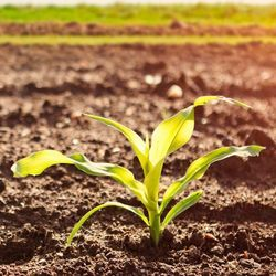 Plants' Ability to Tell Time Could Mean More Sustainable Food Production