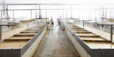 Swiping, Swabbing Elevates Processing Plant Food Safety