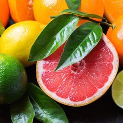 Mapping Citrus Microbiomes to Uncover Their Secrets
