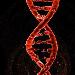 Genes Can Be Accurately Edited in Cells throughout the Body
