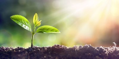 New Insights into How Phytochromes Help Plants