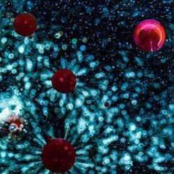 Drug Blocks Multiple SARS-CoV-2 Variants in Mice