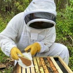Tiny Technology Protects Bees from Deadly Insecticides