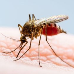 Climate Change Makes West Nile Virus Outbreaks 'Plausible' in UK