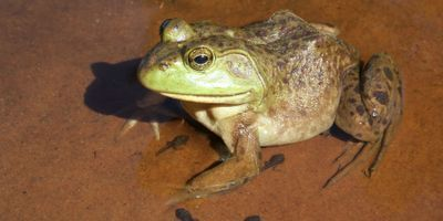 Life Stage Differences Shield Ecological Communities from Collapse