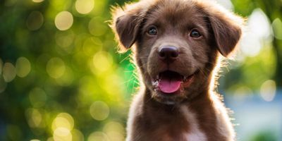 Puppies Are Wired to Communicate with People