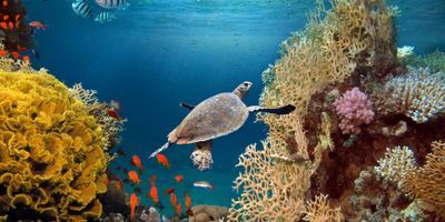 Projected Acidification of the Great Barrier Reef Could Be Offset by 10 Years