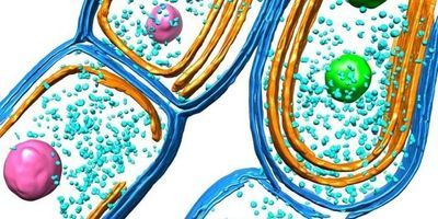 New Insight into Photosynthetic Membranes in Bacteria
