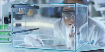Animal Studies May Not Translate to Humans without Time Considerations