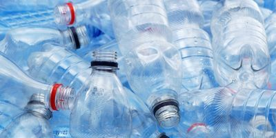 Bacteria Serves Tasty Solution to Global Plastic Crisis