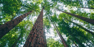 Researchers Publish Unique Vegetation Database as Open Access