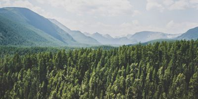Russian Forests Are Crucial to Global Climate Mitigation