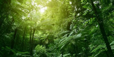 Global Network Transforming Tropical Forest Research