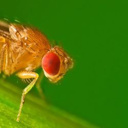 More Filling? Tastes Great? How Flies, and Maybe People, Choose Their Food
