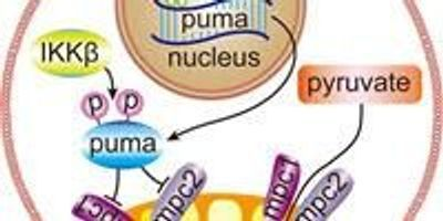 Opposite Effect: Protein Widely Known to Fight Tumors Also Boosts Cancer Growth