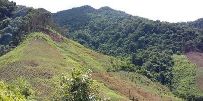 Rise in Southeast Asia Forest Clearance Increasing Greenhouse Gases