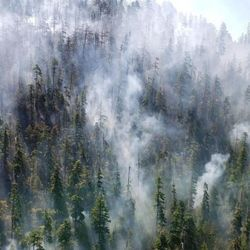 Roadless Forests See More Blazes but Fire Resilience Is the Result