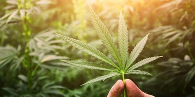 Association between Perceived Risk, Availability, and Past-Year Cannabis Use