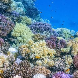 Three Key Habitat-Building Corals Face Worrying Future Due to Climate Crisis