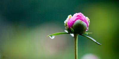 Scientists Rewrite the Rule Book of Flowering Plant Genetics