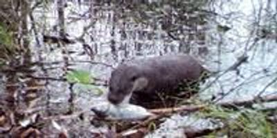 Wildlife Is Abundant in Chernobyl