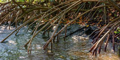 Functional Diversity of Mangrove Invertebrates