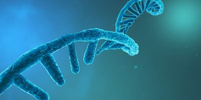 Two RNA Strands Are Tougher than One
