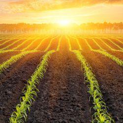 Biofertilizer for Better Farms