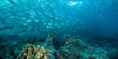 New Approach Opens Window into Life below the Seafloor