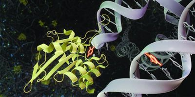 Vital Enzyme Holds Key to the Fight against Cancer and Viral Infections