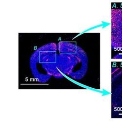 Trans-Scale Scope Shows Big Picture of Tiny Targets