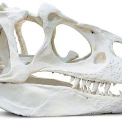 <em>T. rex</em>&rsquo;s Jaw Had Sensors to Make It an Even More Fearsome Predator